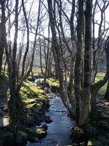 Beautiful stream and trees in the sunlight taken near Capel Curig Community Centre